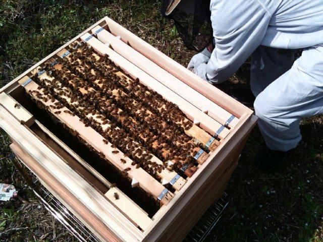 蜂箱処理中。